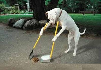 cachorro-limpar-coco-boxer